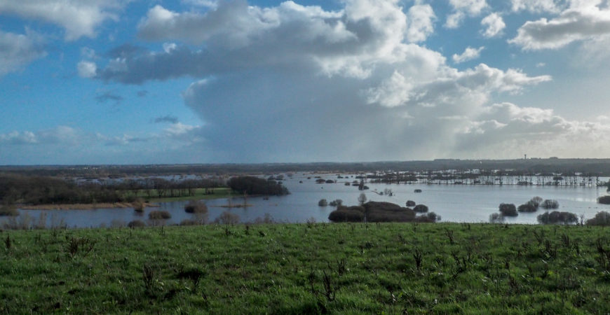 Balade d'hiver : le Marais de Goulaine