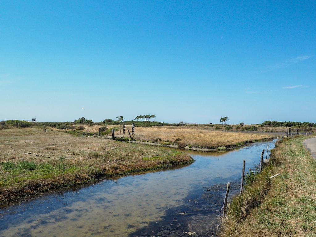 Marais de Lyarne Les Moutiers en Retz