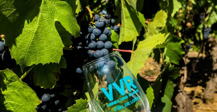 VVR 2019 : Vignes Vins Rando dans les Coteaux d'Ancenis