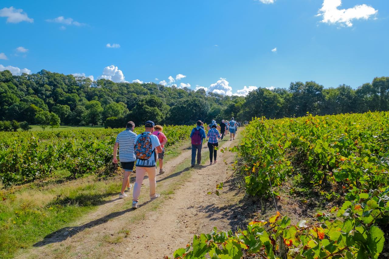 Randonneurs dans vignoble Muscadet Sèvre et Maine