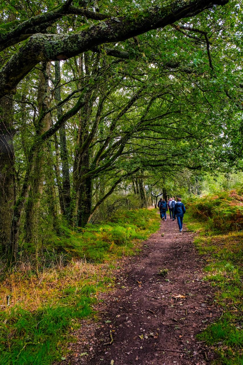 Marcheurs sous les arbres