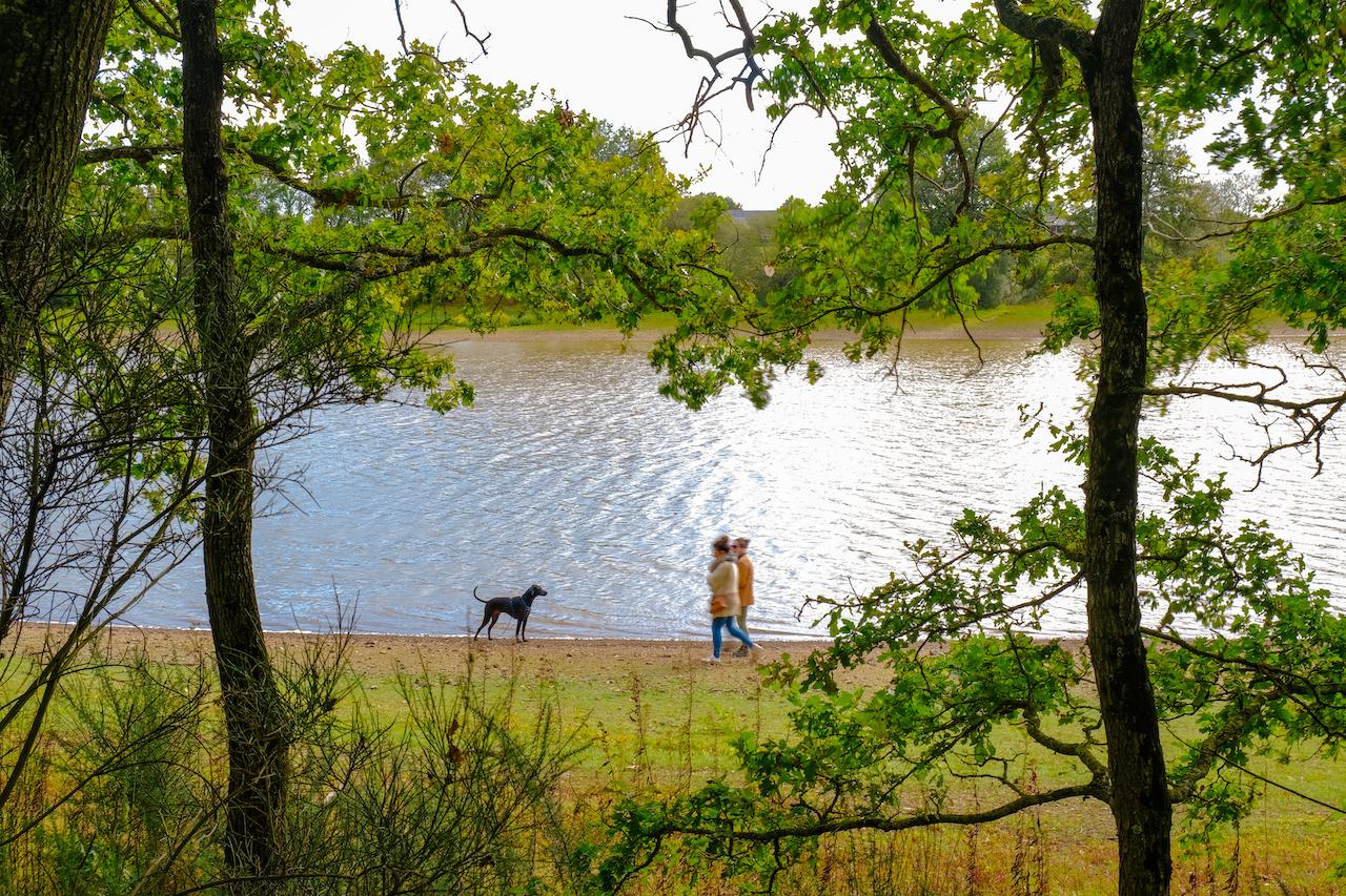 Marcheurs avec chien