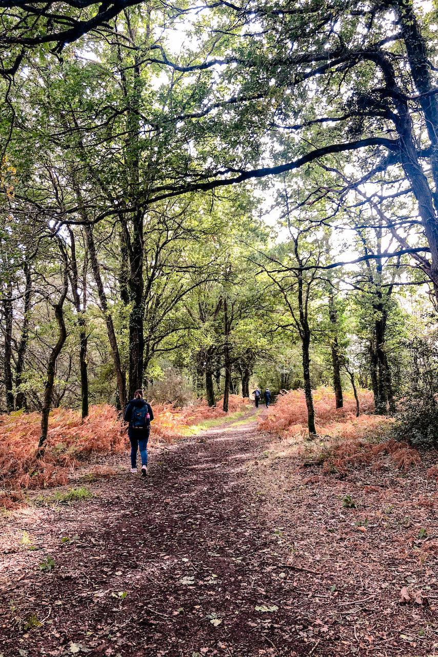 Forêt Vioreau