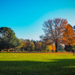 Nantes en automne – Balade au Parc de Procé et Val de Chézine
