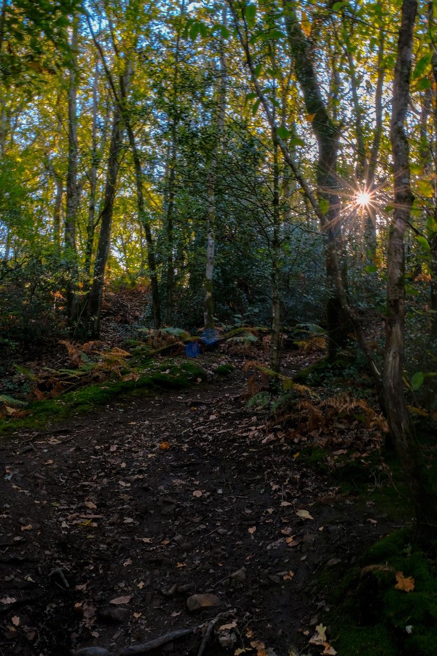 Forêt Lac de Savenay