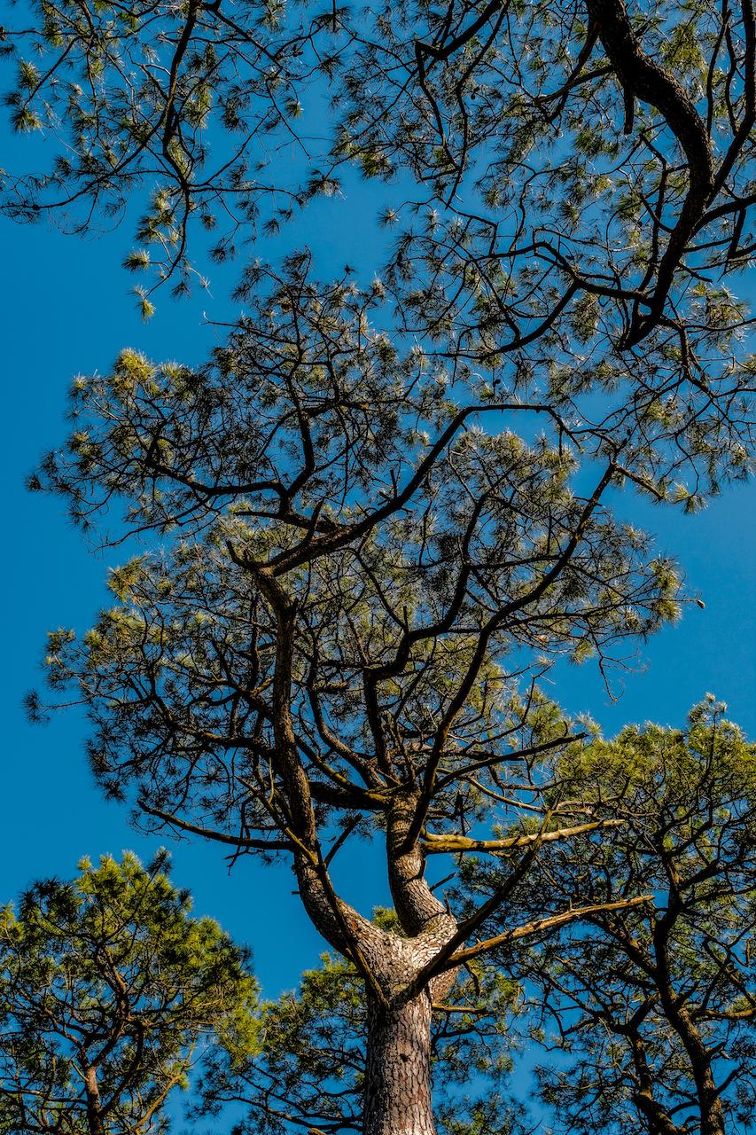 Forêt Attelée