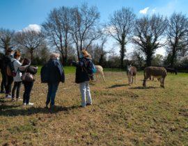 Journée à Nort-sur-Erdre – La Ferme du Biau Chemin des Landes